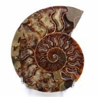 Ammonit gesägt und poliert
